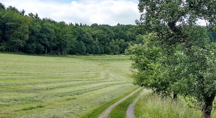 Weg bei Spurkenbach klein 1200x400